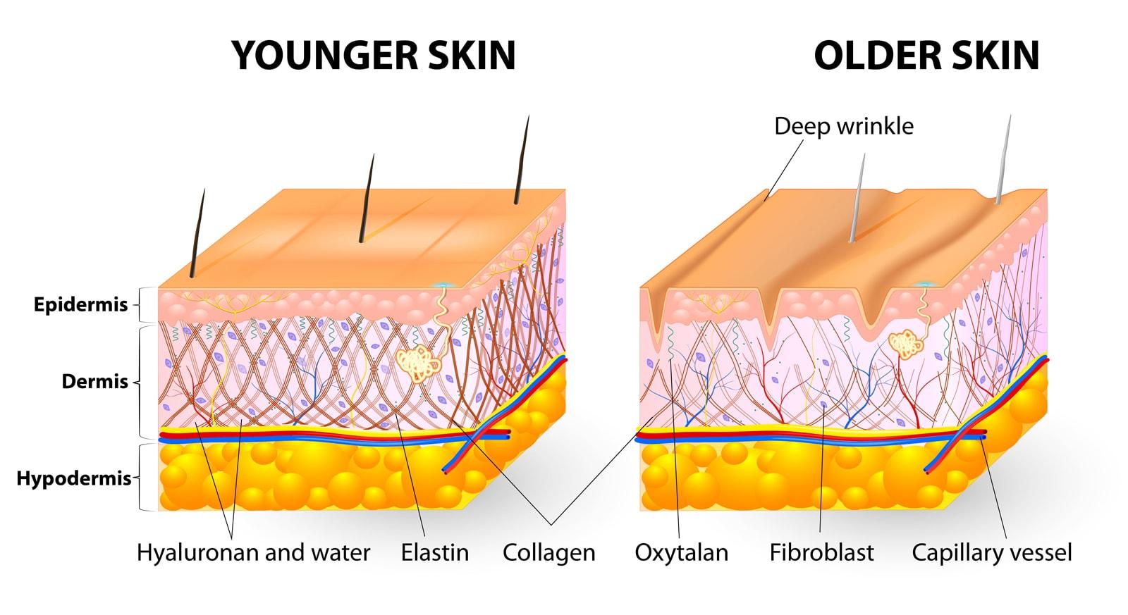 collagen can help keep skin healthy