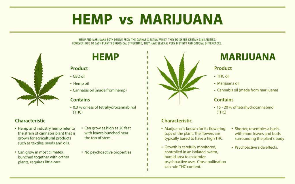 Hemp vs Marijuana/cannabis infographic