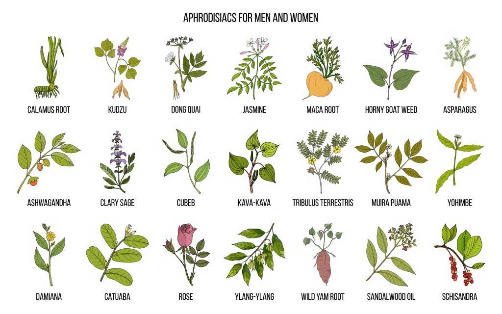 aphrodisiac plants and herbs