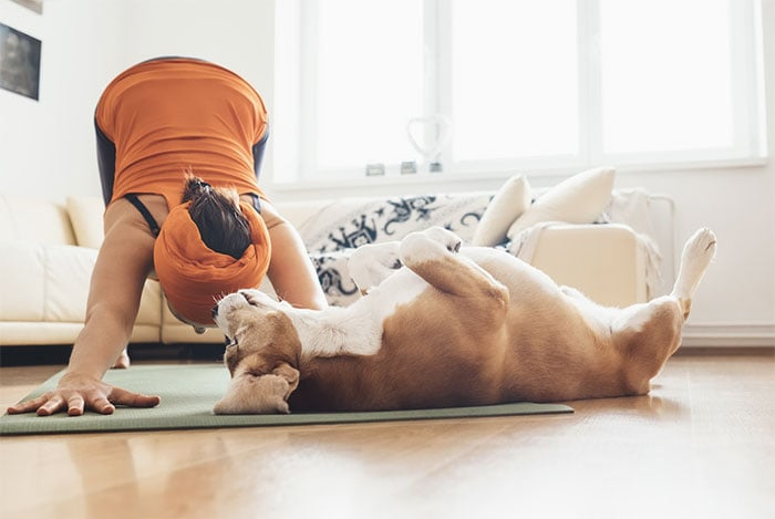 Is CBD good for my pet? Dog and owner doing yoga