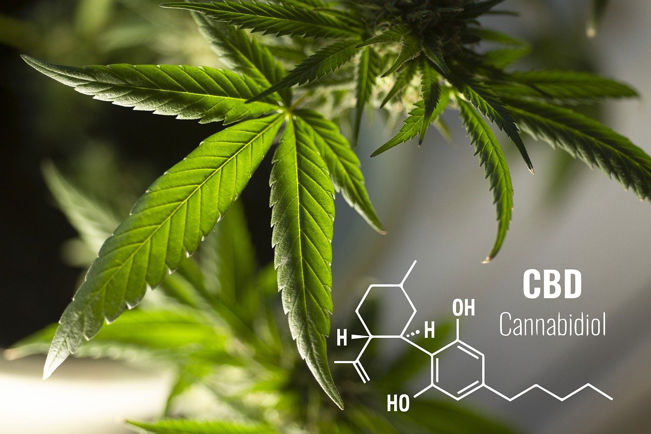 Cannabis plant leaves with chemical components
